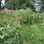 Dépôt des déchets verts